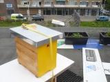 Bijen op het dak